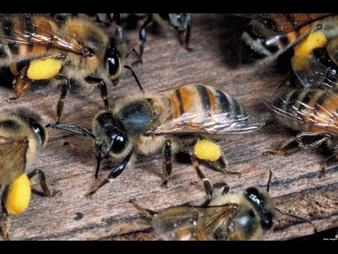 Did You Know Extension - Beekeeping