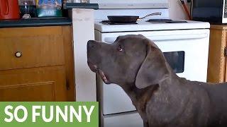 シャボン玉に飛びついて遊ぶ犬