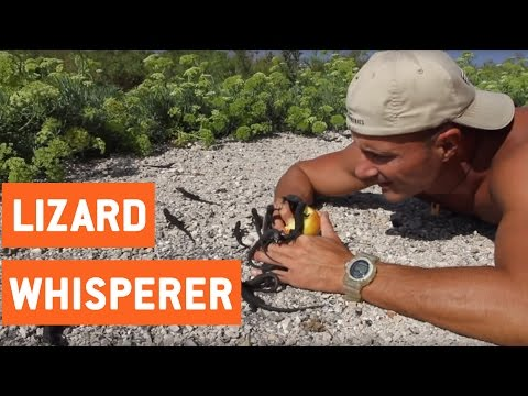 Lizards Crawl On Man's Hands | Lizard Whisperer