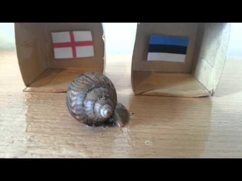 England v Estonia - UEFA EURO 2016 QUALIFIERS PREDICTION