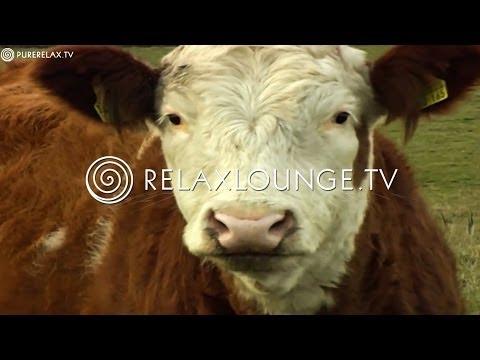 Naturvideos - Naturklänge, Schweine, Kühe, Pferde Und Schafe - TIERE AUF DEM BAUERNHOF