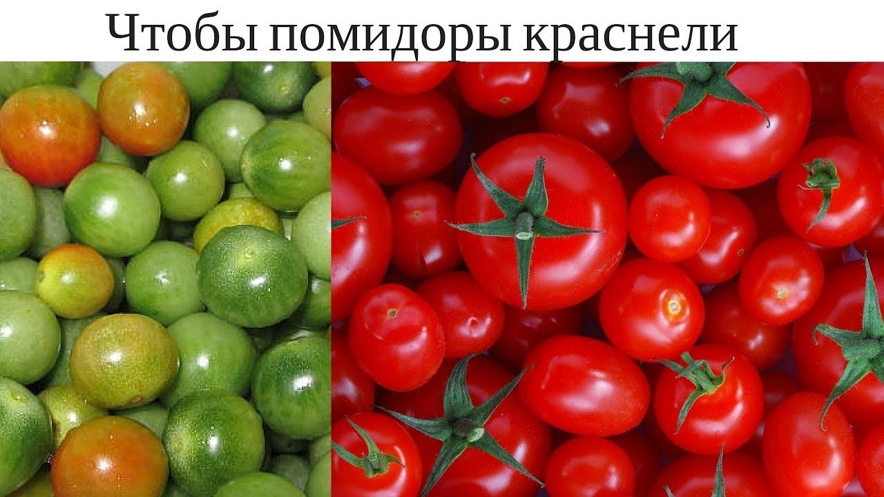 Что сделать чтобы зелёные помидоры покраснели?