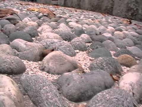 Ścieżki ogrodowe z kamienia polnego