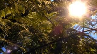 #6927, Plantas y helechos verdes [Raw], Plantas y  Naturaleza