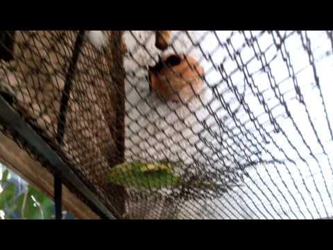 Nehru zoo park Parrots