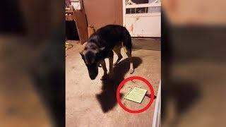 Encontraron a su perro herido y con una nota a su lado. Lo que le pasó es de no creer