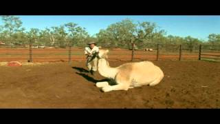David Ireland working with camels in outback NSW