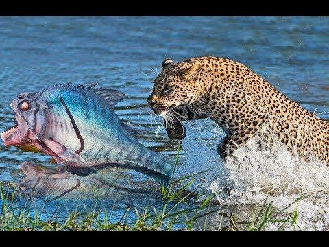 ЛЕОПАРД ЖЕСТОКО СОЖРАЛ СОМОВ ! ТАКОЙ ХИЩНОЙ РЫБАЛКИ 2018 ТЫ ЕЩЕ НЕ ВИДЕЛ ! Жестокая рыбалка 2018