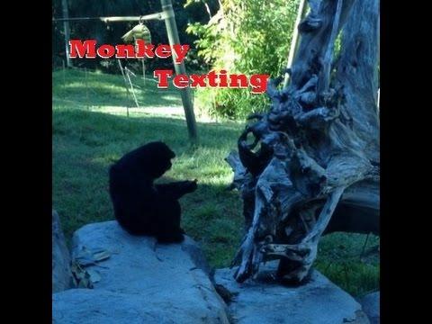 [Monkey Imitates Texting !] Video