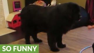 Toddler tries teaching dog to Hula Hoop