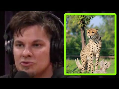 Theo Von: Making Love to a Cheetah - Joe Rogan