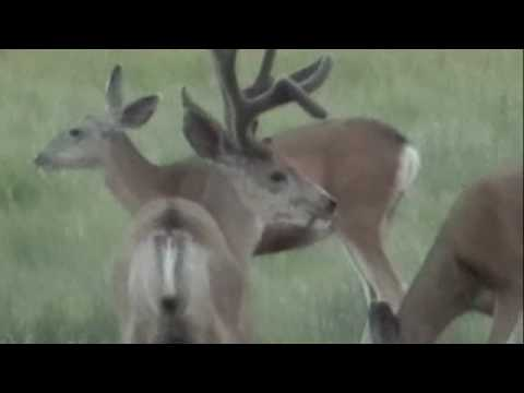 Largest Whitetail Deer Deer Killed In Texas 2013 New /page/308