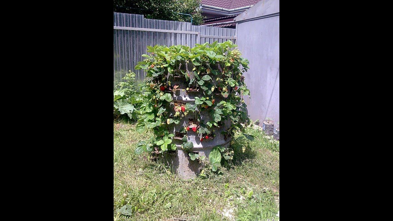 Выращивание клубники в колесах фото 85