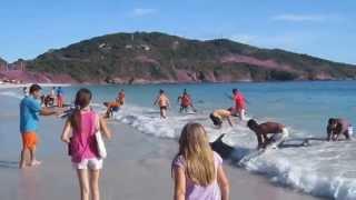 סרטו מרגש בני אדם מצילים דולפינים