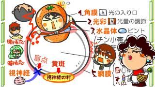 生物4章3話「目のしくみ」byWEB玉塾