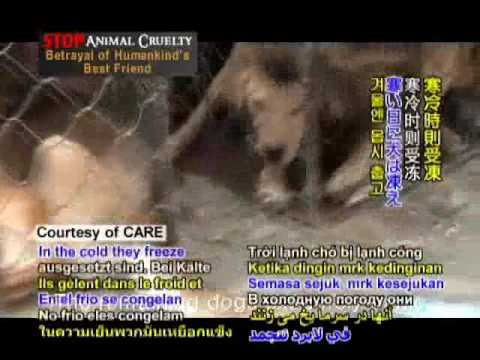 Animals Asia - Stop Animal Cruelty: Betrayal of Human's Best Friend - Part I