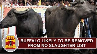 Buffalo likely to be removed from no slaughter list | Thanthi TV