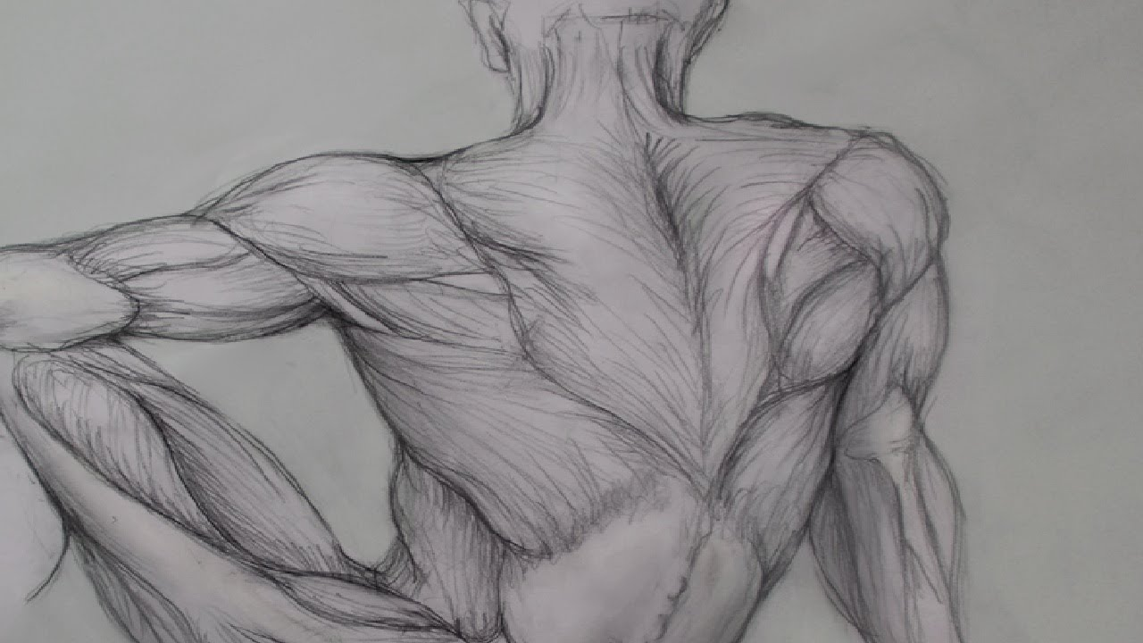 Human Anatomy Pencil Drawings Drawing Human Anatomy