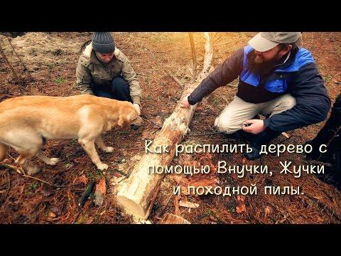 Как распилить дерево с помощью Внучки, Жучки и походной пилы.
