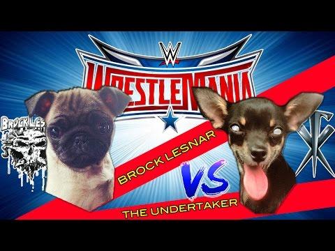 WWE WRESTLING PUPPY VERSION - BROCK (PUG) VS UNDERTAKER (CHIHUAHUA )