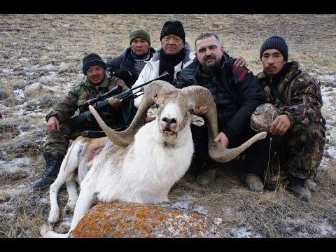 Киргизия. Охоты на трофейных козерогов и баранов.