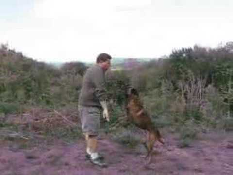 Dog Training - Solve Your Dog's Jumping Problem video