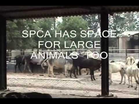 SPCA NOIDA (INDIA)