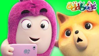 Oddbods | PURR-FECT CAT SELFIE  | Funny Cartoons For Children