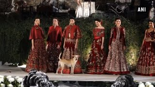 Street dog walks at Rohit Bal's fashion show in Mumbai