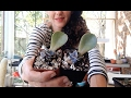 Succulent Leaf Propagation From Start To Finish W Sucs For You mp3