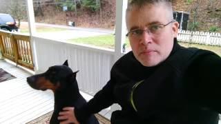 Adopting A Doberman Pinscher What You Should Know