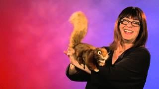 Folkmanis® Red Squirrel Puppet Demo