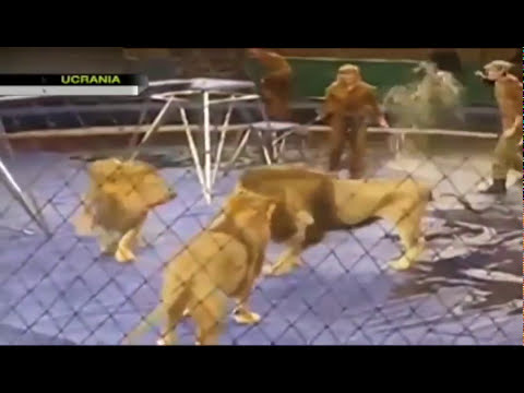 León ataca a domador de circo en Ucrania / Lion attacks tamer in Ukraine