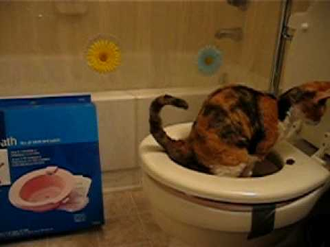 Flying Poop: Cat Toilet Training Day 17