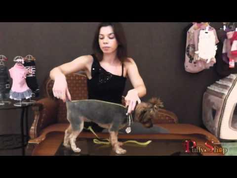 Видео как снять мерки с собаки