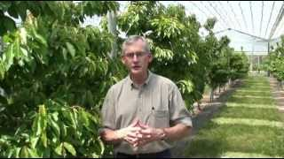 Overview of High Efficiency Sweet Cherry Orchard Systems Research, Dr Greg Lang, MSU