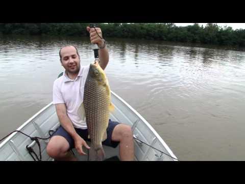 Pescaria - Piauçu - Piaussu de 6 Kg pescado no Rio Paraná  \o/