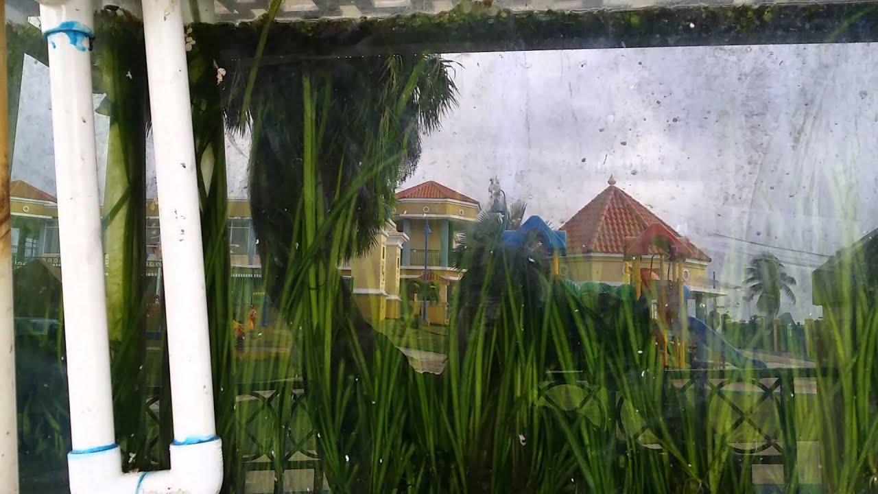 Conservaci n de agua recolectando agua de lluvia youtube - Agua de lluvia ...