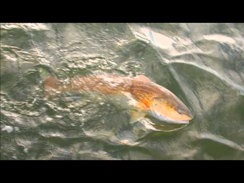 Inshore fishing in Florida