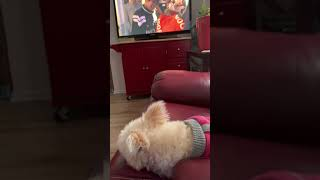 Watching a Netflix Movie Dogs with my Dogs