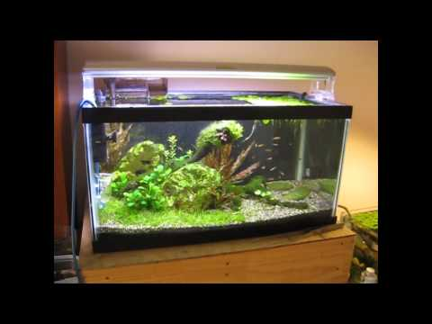 15 gallon freshwater community tank how to save money for 15 gallon fish tank