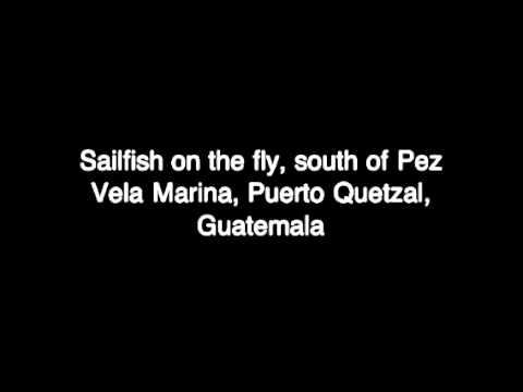 Catching Sailfish on the Fly in Guatemala.