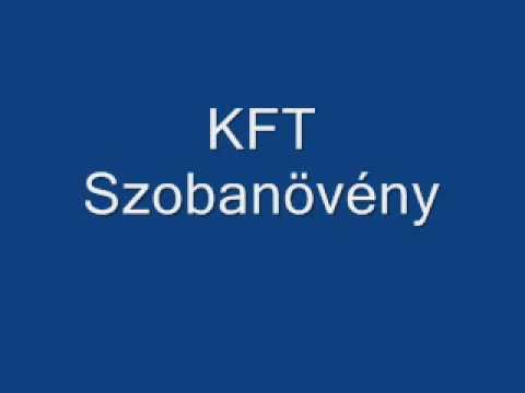 KFT - Szobanövény