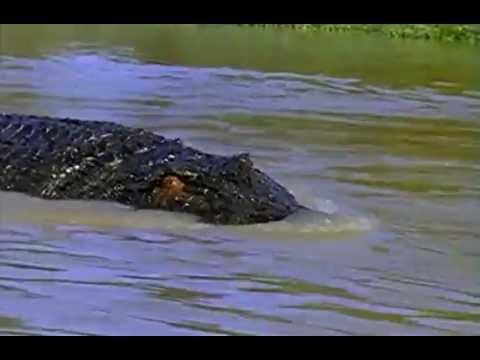 crocodile 2 death swamp ending a relationship