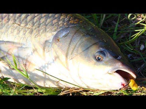 рыбная ловля на кукурузу