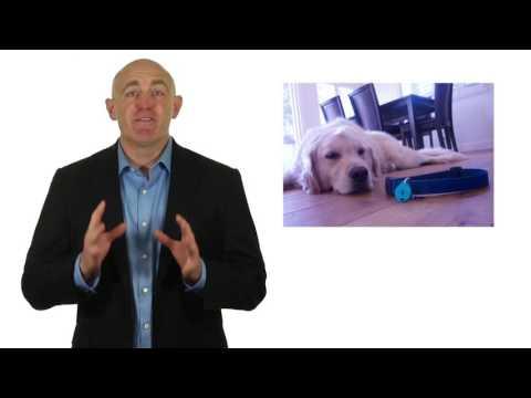 GPS Dog Tracker Collar Tag Review Pet GPS Locator Phone App