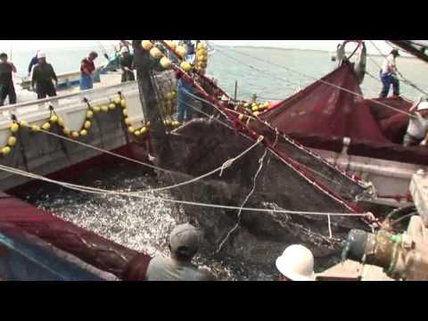 【探訪】「大衆?高級?謎のイワシ漁」 千葉県・銚子沖
