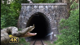 Rail traffic in Romania - Snakes, tunnels, bridges - National Park Jiului [4K]