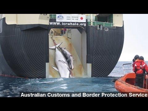 UN Court Halts Japan's Whaling Program