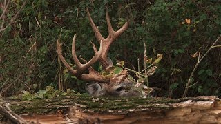 MONSTER BUCK at 5 YARDS!  How Did We MESS This Up?! | Hunt Breakdown